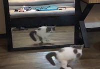 Kissanpentu ja peilikuva