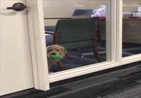 Koira työpaikalla
