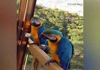 Höpsöt linnut