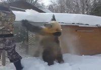 Lumitöitä karhukaverin kanssa