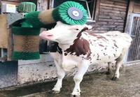 Lehmän harjauskone