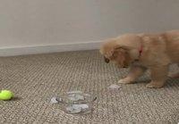 Koiranpennun reaktio jääpaloihin