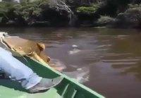 Alligaattori kiinnostuu kalansaaliista