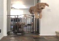 Tarpeellinen koiraportti