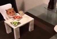 Hamsterin kanssa aterialla