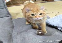 Kissa noutaa