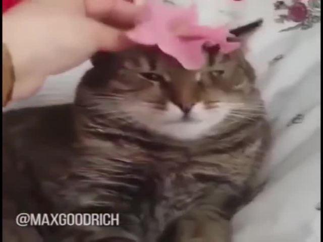 musta kissa lesbo