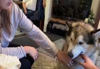Iso koira haukkuu