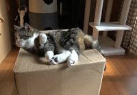 Kissa ja laatikon yllätys