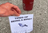Tired of being a bird?