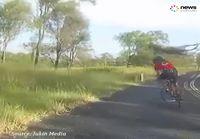 Kenguru ei tykkää pyöräilijästä
