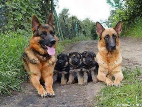 Iloinen koiraperhe :3