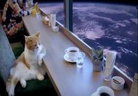 Kissa avaruuskahvilassa