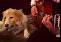 Rämpyttelyä koiran kanssa