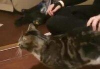Kissa jännän äärellä