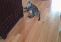 Ihailtavan laiska kissa