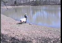 Lammas ja mies