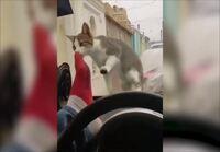 Kissan kiusaaminen