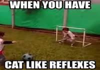 Kissamaiset Refleksit