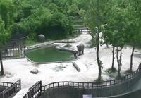Norsun poikanen putoaa veteen