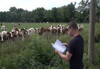 Konsertti Lehmille