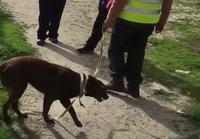 Koira tapaa omistajansa 2v.karkumatkan jälkeen