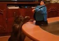 Utelias kissa yllätetään