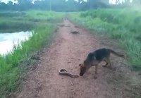 Koira ja Sähköankerias