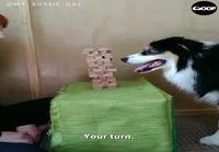 Fiksu koira