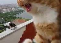Kissa juttelee variksen kanssa