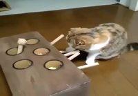 Kissa ihmettelee peliä