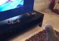 Kissa katsoo Tom & Jerryä