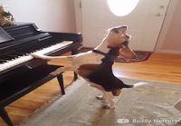 Beagle soittaa pianoa ja laulaa