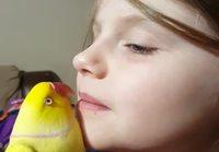 Hyvänyönsuukkoja papukaijalle