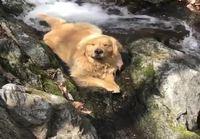Koira viilentymässä