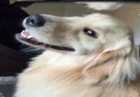 Koiralle rapsutuksia