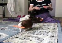 Marsuille porkkanoita