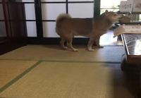 Koiran ruokakuppi tyhjänä