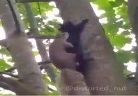 Oravat vauhdissa