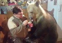 Jäätelön syöntiä karhun kanssa