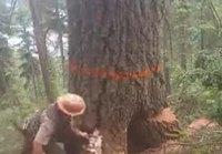 Puu menee päreiksi