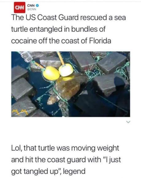 Paketteihin sotkeutunut merikilpikonna